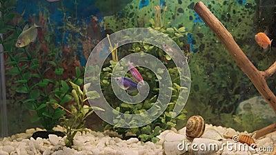 Pesci e piante nell'acquario video d archivio