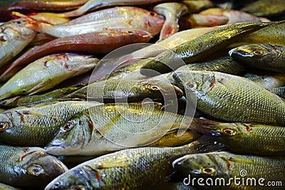 Pesci freschi
