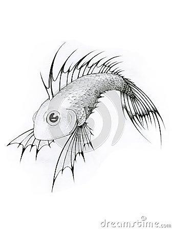 Pesci tropicali in bianco e nero