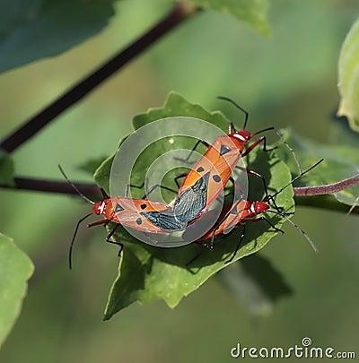 Pests 1