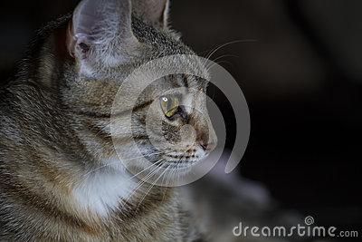 Pet, Adorable common cat hair tabby
