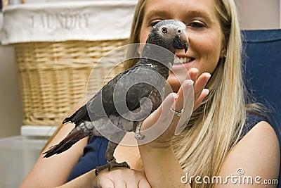 Pet African Grey