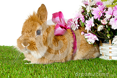 Pet brown rabbit with pink bow.