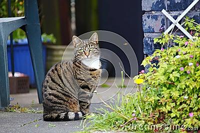 Pet cat in garden