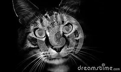 Pet Cat in Shadows