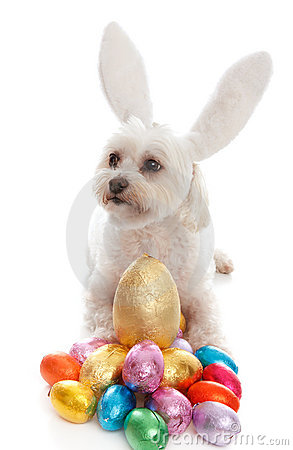 Pet dog animal with easter eggs