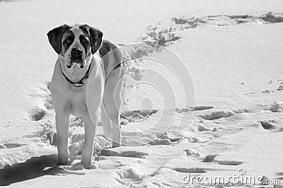 Pet dog standing in snow