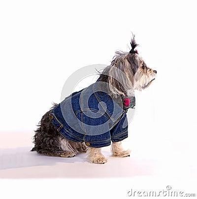 Pet Dog Waiting At Home