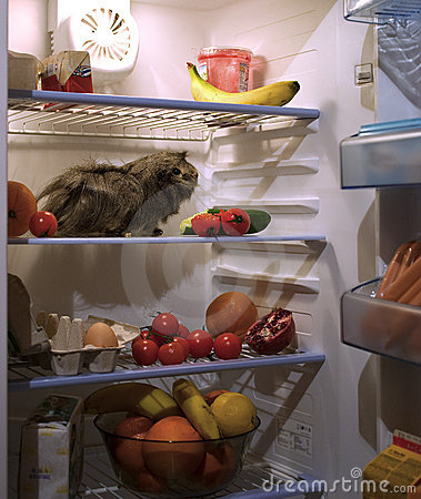 Pet in the fridge