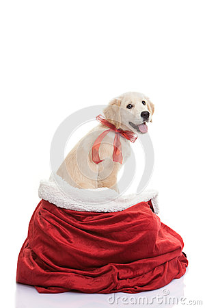 Pet gift for christmas holiday
