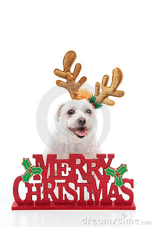 Pet with Merry Christmas message