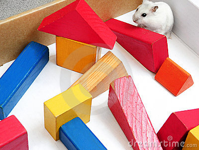 Pet rodent white mouse playing