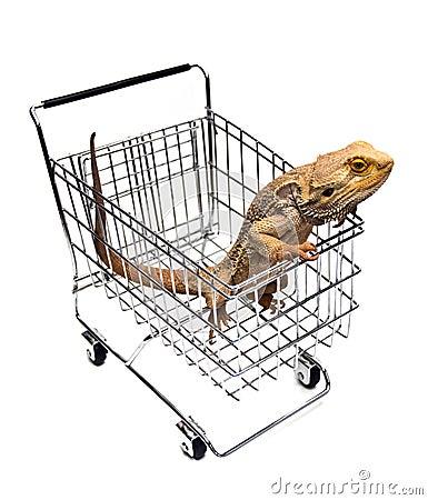 Free Pet Shopping Stock Photography - 8013462