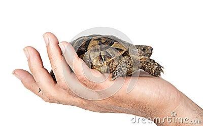 Pet tortoise in hand