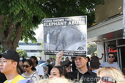 Peta Protest Editorial Stock Photo