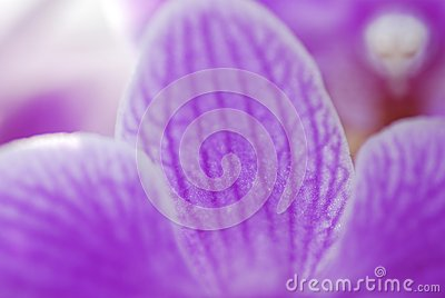 Petal orchid