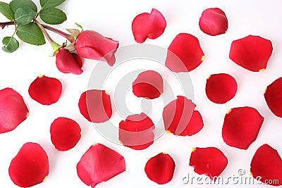 Petal and rose