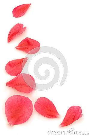 Free Petal Surround Stock Images - 1664834