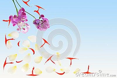 Petals 2H