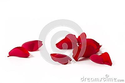Petals of a rose