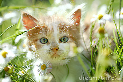 petit chat mignon dans l 39 herbe verte images stock image 9640504. Black Bedroom Furniture Sets. Home Design Ideas