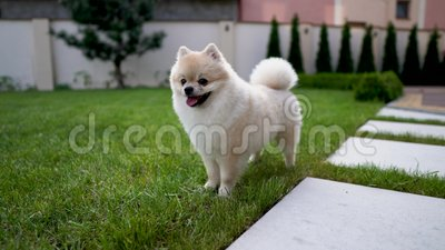 Petit chien mignon se tenant sur l'herbe dans le jardin outdoors clips vidéos