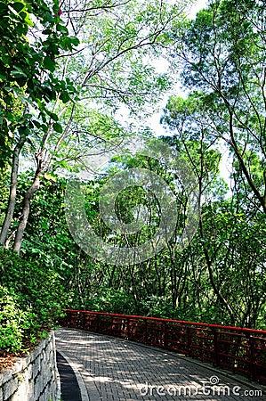 Petite bordure de chemin avec la plante verte