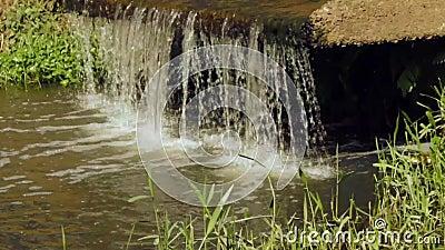Petite cascade dans le jardin clips vidéos