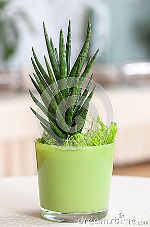 Petite plante d 39 int rieur dans un pot de fleur vert clair for Plante lumineuse