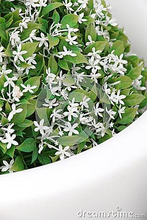 fleurs blanches en pot exterieur. Black Bedroom Furniture Sets. Home Design Ideas