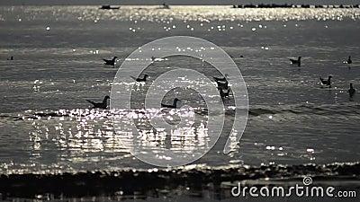 Petits vagues et oiseaux de mer dans la lumière de matin banque de vidéos