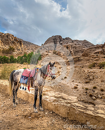 Petra horse