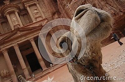Petra in Jordan - the treasury
