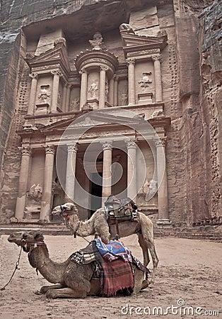 Petra in jordan two camels