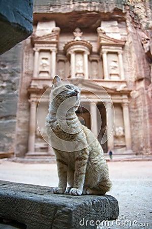 Petra treasury s cat, Jordan