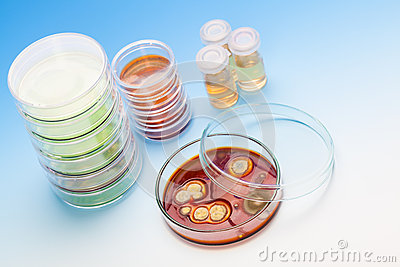 Petri dish with colonies of microorganisms