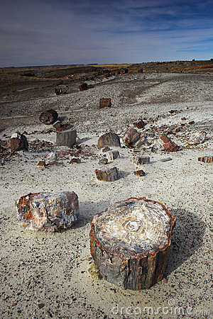 Free Petrified Forest Royalty Free Stock Images - 3547119