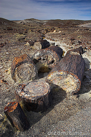 Free Petrified Forest Stock Photography - 3559382