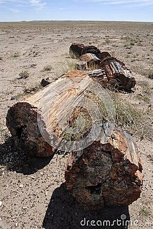 Free Petrified Forest National Park - Arizona. Royalty Free Stock Images - 5867719
