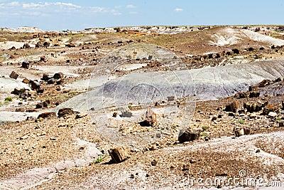 Petrified Forest National Park Landscape