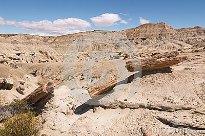 Petrified Forest  Patagonia Argentina
