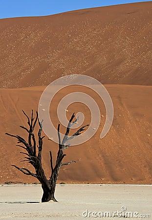 Petrified tree at Dead Vlei - Namibia