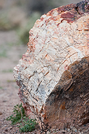 Petrified tree trunk