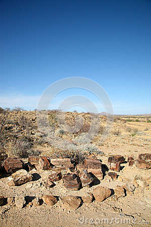 Free Petrified Tree Trunk And Desert In Namibia Stock Image - 39996861