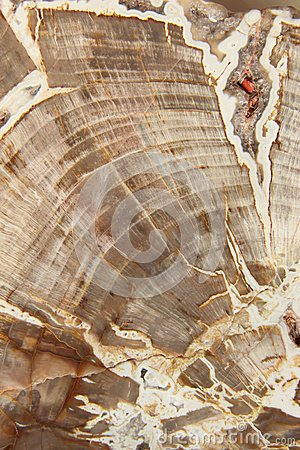 Free Petrified Wood Royalty Free Stock Photo - 26065375