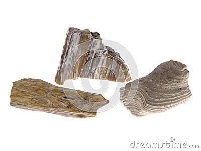 Petrified Wood. Origin: Poland