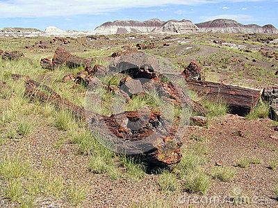 Petrified Wood at Petrified Forest National Park, Arizona, USA