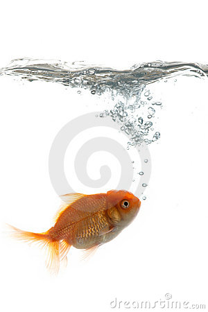 Free Pets Fish In Water Stock Images - 3534424