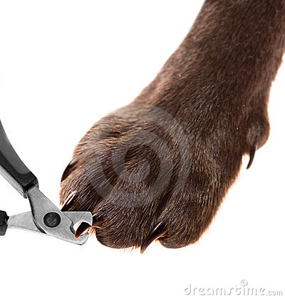 Free Pets Pedicure - Claw Trimming Royalty Free Stock Images - 22208999