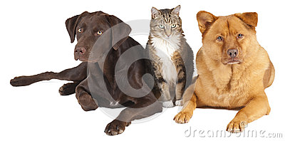 Pets together